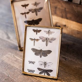 Decor Paperie Moth Prints-6