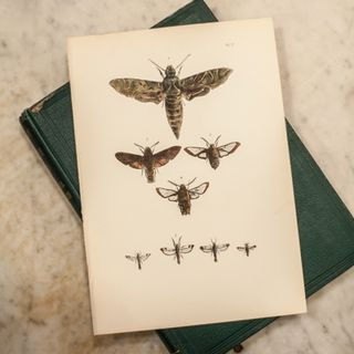 Decor Paperie Moth Prints-3